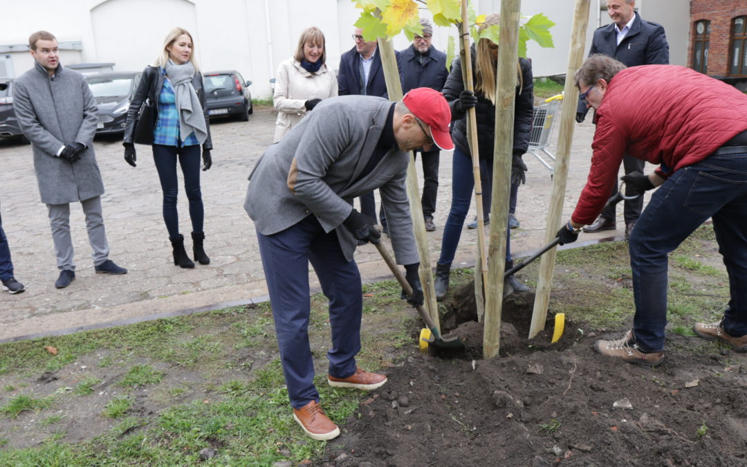 Tree Day with Grupa Kapitałowa IMMOBILE and Immo Foundation